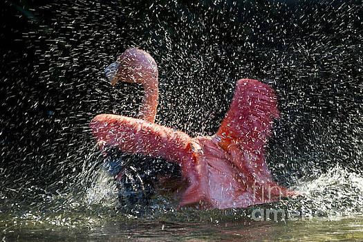 Splish splash by Zsuzsanna Szugyi