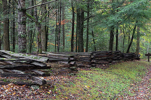 Split rail fence view from side with forest behind on a wet fall day by Natalie Schorr