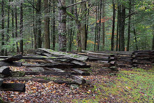 Split rail fence with moss, raised up on rocks, with forest behind by Natalie Schorr