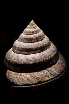 Split Shell by Jill Friedman