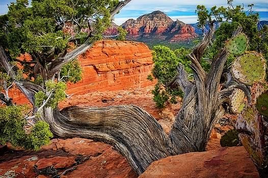 Split View, Capital Butte, Sedona, Arizona by Flying Z Photography by Zayne Diamond