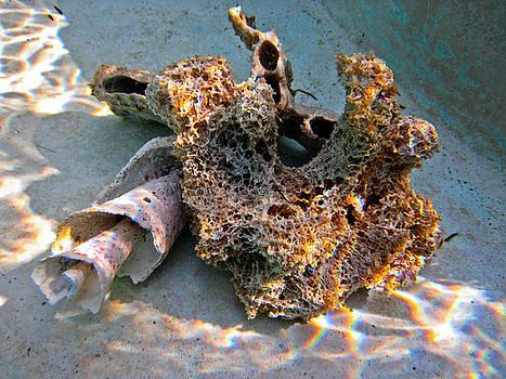 Sponge and Shell by Barbara Kelley