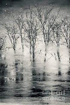Spooky forest reflection landscape by Dimitar Hristov