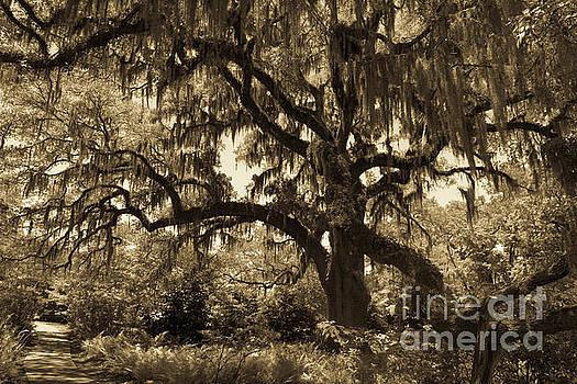 Dale Powell - Spooky Halloween Tree in Sepia
