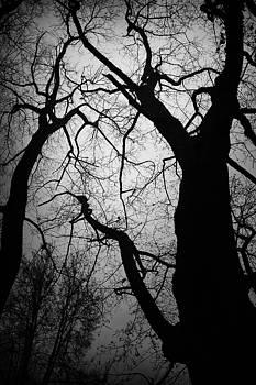 Spooky by Ken Myrk