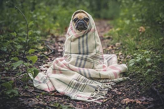 Spooky Pug by Fine Art Photography