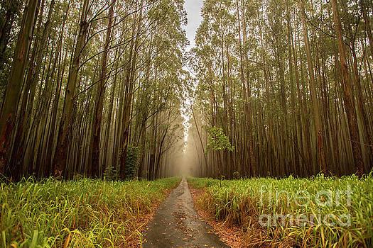 Spooky Trail 1 by Daniel Knighton