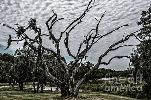 Dale Powell - Spooky Tree on Wadmalaw Island