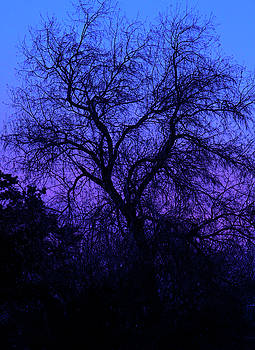 Spooky Tree by Paul Marto