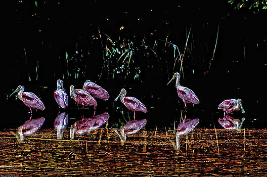 Spoonbills at Sunset by Bill
