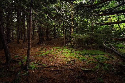 Spot of Light by Greg Dollyhite