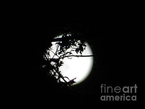 Spotlight Moon by Leara Nicole Morris-Clark