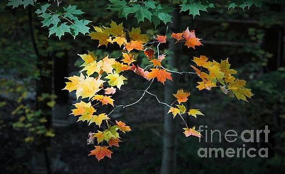 Spotlight on Fall by Marcia Breznay