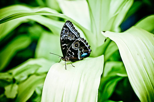 Spotted Butterfly by Tamara Hamula