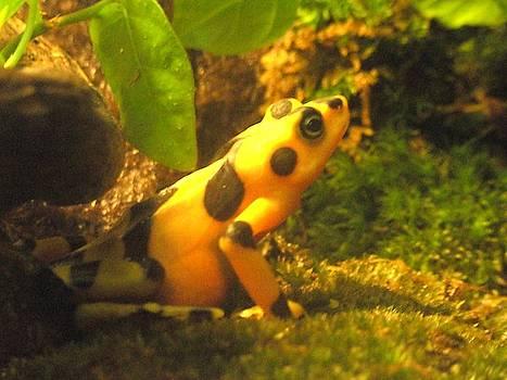 Tammy Bullard - Spotted Frog