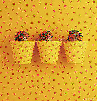 Anne Geddes - Spotted Pots