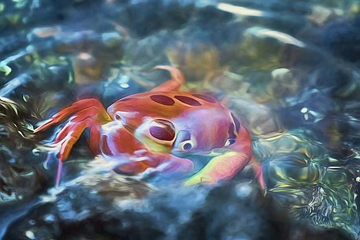 Susan Rissi Tregoning - Spotted Rock Crab