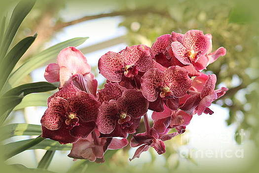 Spray of Coral Orchids by Dora Sofia Caputo Photographic Art and Design