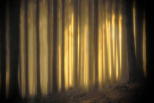 Spray of Sunshine by Andrea Kollo