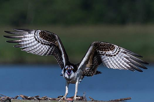 Spread Your Wings by Cindy Lark Hartman