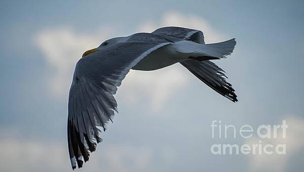 Spread Your Wings by Debbie Morris