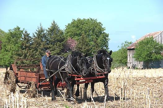 Valerie Kirkwood - Spreading Manure with Ann and Belle