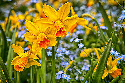 Spring Alive by Jodi Jacobson