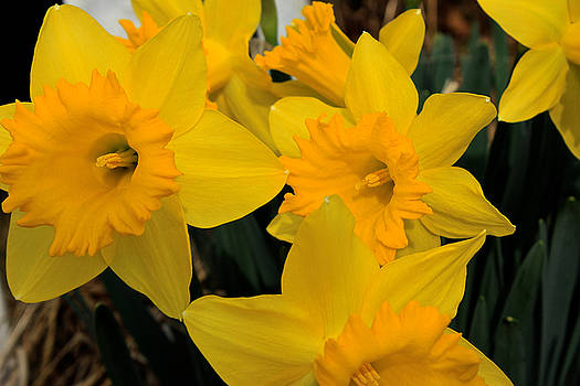 Spring Announcements  by Carolyn Wright