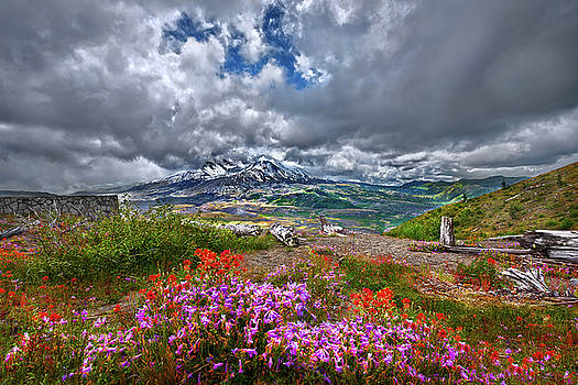 Spring at Mt St Helens by Mark Rainer