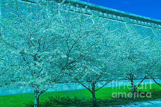 Spring At The Dam by Dan Hilsenrath