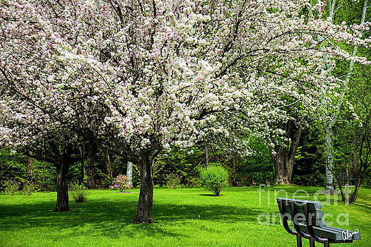 Spring at the Park by Alana Ranney
