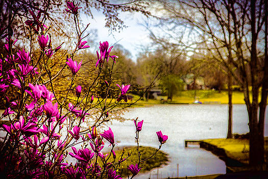 Spring Awakens - Landscape by Barry Jones