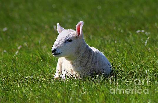 Spring Baby by Clare Bevan