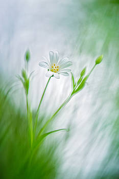 Spring Ballet by Sarah-fiona  Helme