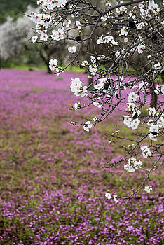 Spring beautiful and colorful landscape. by Michalakis Ppalis