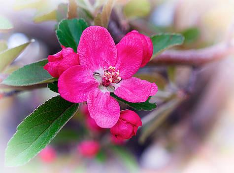 Mary Lee Dereske - Spring Beauty