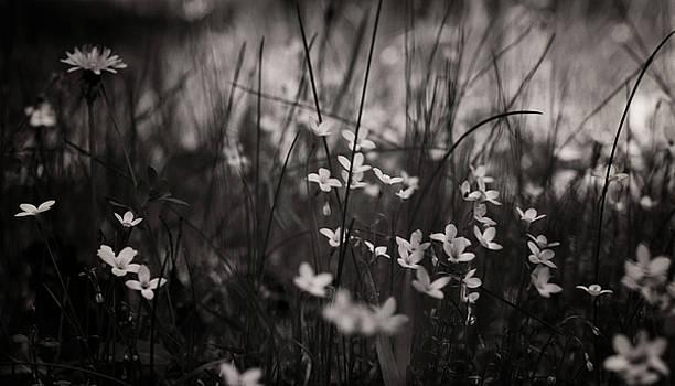 Venura Herath - Spring Beauty