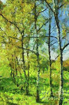 Spring Birches by Dragica Micki Fortuna