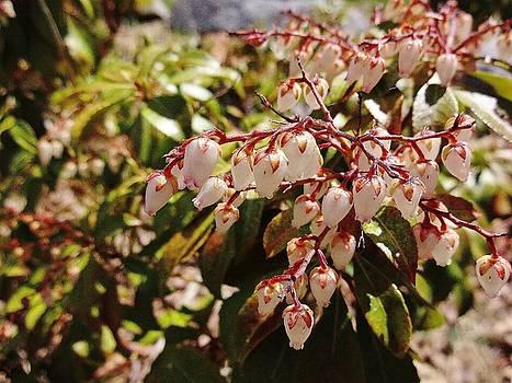 Spring Bloom # 3 by Jason Williamson