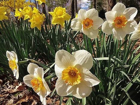 Spring Bloom # 5 by Jason Williamson