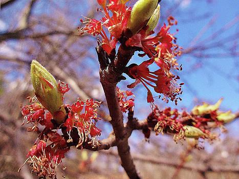 Spring Bloom #1 by Jason Williamson