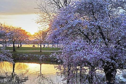 Spring Bloom on the Esplanade and Sunset by Toby McGuire
