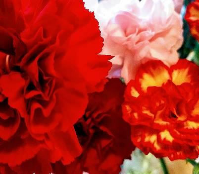 Spring Blooms 3 by Valerie Josi
