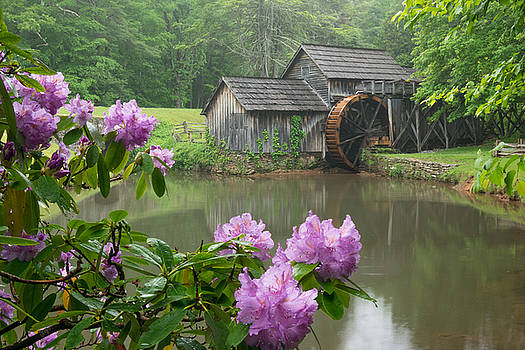 Spring Blooms at Mabry Mill by Greg Dollyhite