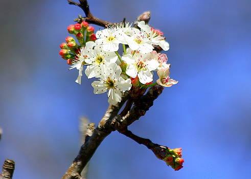 Spring blooms by Billie Earley