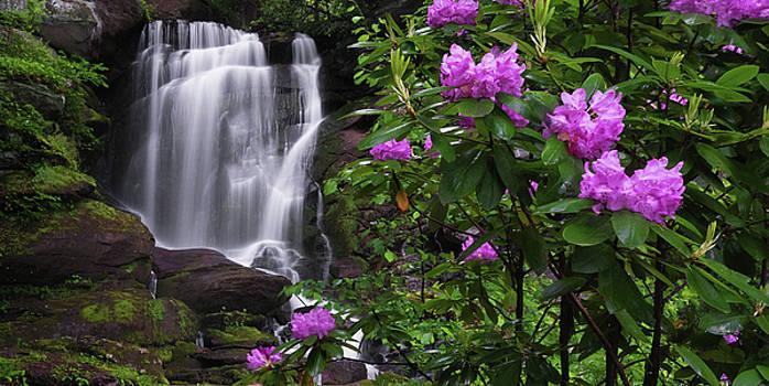Spring Blooms by Reid Northrup