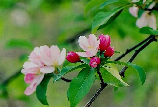 Juergen Roth - Spring Blossom