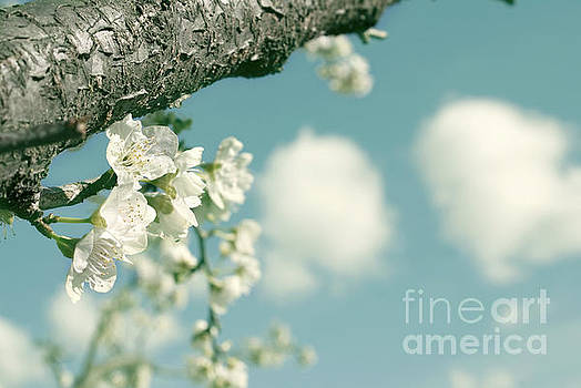 Spring blossoms and puffy clouds by Cindy Garber Iverson