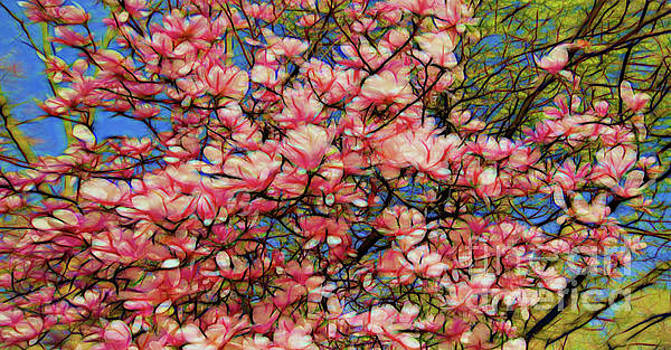 Spring Blossoms by Colin Cuthbert