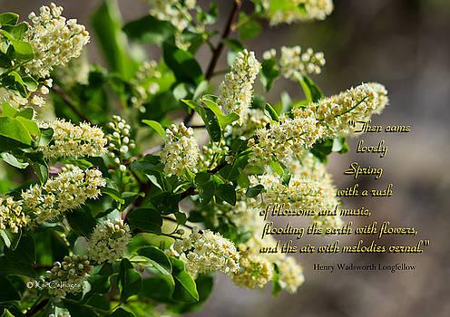 Kae Cheatham - Spring Blossoms